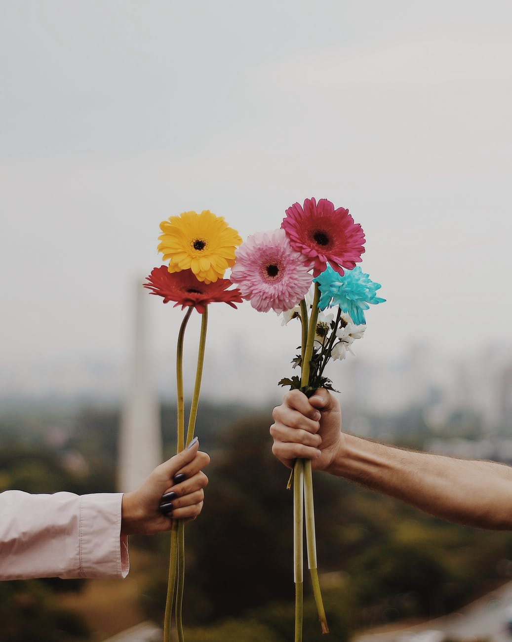 people holding flowers